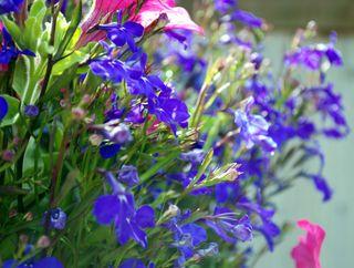 Flower basket1